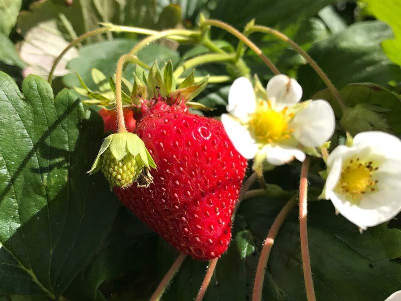 lesrhumsdeced_recette_fruit