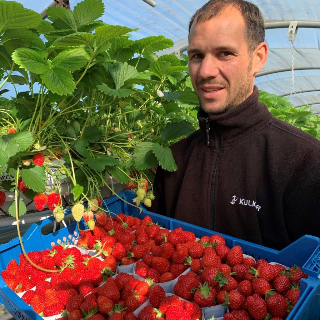Anthony Merlet en charge de la culture et de la récolte des fraises à La Fraiseraie de Pornic